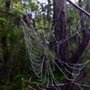 Australia - Uniquely Yours Spider Web Art Print