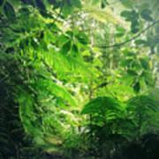 Jungle Leaves Art Print
