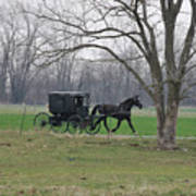 Amish Buggy Art Print