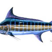 Blue Marlin Art Print