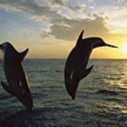 Bottlenose Dolphin Tursiops Truncatus Art Print by Konrad Wothe