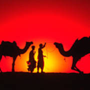 Camels At Sunset Art Print