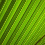 Coconut Palm Leaf Art Print
