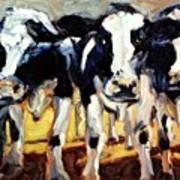 3-cows Art Print