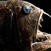 Deep Sea Fangtooth Art Print