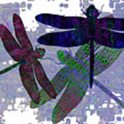 3 Dragonfly Art Print