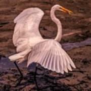 Egret With Fish Art Print