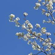 Flowering Trees Art Print