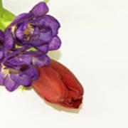 Freesia And Tulip Art Print