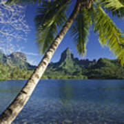 French Polynesia, Moorea Art Print