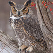 Great Horned Owl Art Print by Cindy Lindow