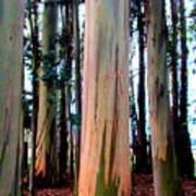Gum Trees  Art Print
