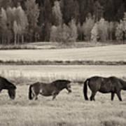 Horses Of The Fall  Bw Art Print