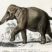 Indian Elephant, Endangered Species Art Print