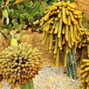Kaktus Art Print