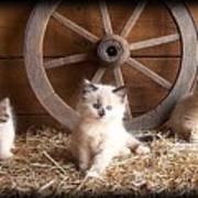3 Little Kittens With The Wagon Wheel. Art Print
