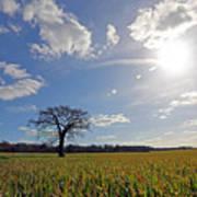 Lone Oak Tree In English Countryside Art Print