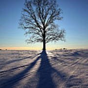 Lone Tree In Snow Art Print