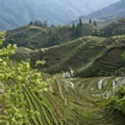 Longsheng Rice Terraces Art Print
