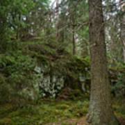 Old Forest In Kauppi Tampere Art Print