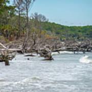 Palmetto Forest On Hunting Island Beach Art Print