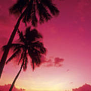 Palms Against Pink Sunset Art Print