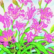 Pink Daily Lilies Art Print