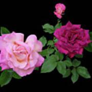 3 Pink Roses Cutout Art Print