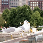3 Seagulls In A Row Art Print