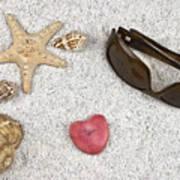 Seastar And Shells Art Print by Joana Kruse