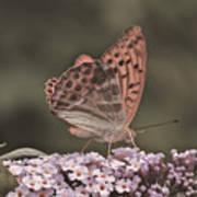 Tramonti Butterfly Art Print
