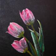 3 Tulips Art Print