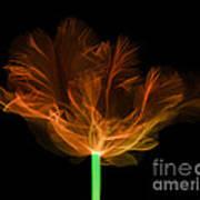 Tulips, X-ray Art Print