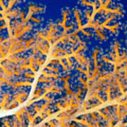 Underwater Close-up Art Print