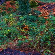 Wet Leaves Art Print