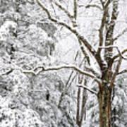 Winter In Monongahela National Forest Art Print