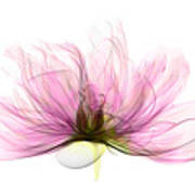 X-ray Of Peony Flower Art Print