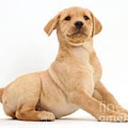 Yellow Labrador Retriever Puppy Art Print