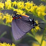 3398 - Butterfly Art Print