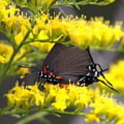 3454 - Butterfly Art Print