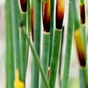 Bamboo Grass Art Print