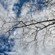 Trees Sky And Clouds Art Print