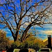 365 012716 Ancient Valley Oak And Parking Art Print