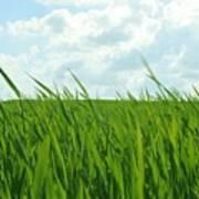 38744 Nature Grass Art Print