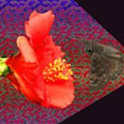3d Butterfly Art Print