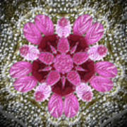 3d Pink Purple Mandala Painting Art Print