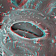 Agrobacterium Tumefaciens Art Print