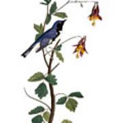 Audubon: Warbler, (1827-38) Art Print