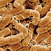 Bacillus Thuringiensis Bacteria Art Print