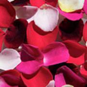 Back Lit Flower Petals 1 Art Print